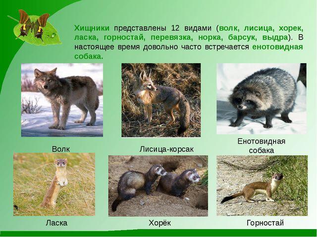 Лисица-корсак Волк Енотовидная собака Хищники представлены 12 видами (волк, л...