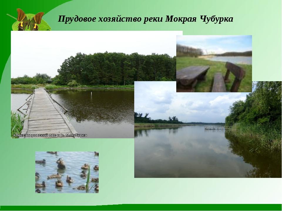 Прудовое хозяйство реки Мокрая Чубурка