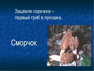 Зацвели сережки – первый гриб в лукошке. Сморчок