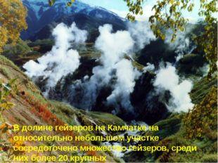 В долине гейзеров на Камчатке на относительно небольшом участке сосредоточено