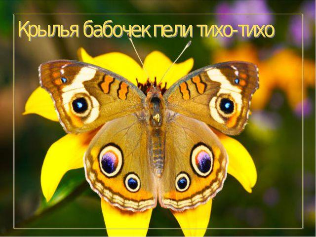 Крылья бабочек пели тихо-тихо