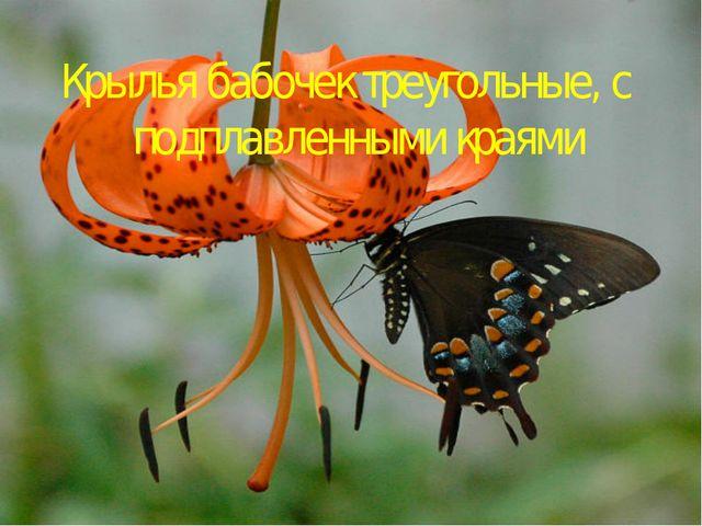 Крылья бабочек треугольные, с подплавленными краями