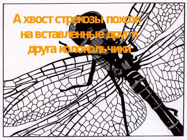 А хвост стрекозы похож на вставленные друг в друга колокольчики