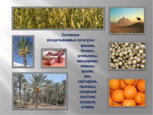 Основные возделываемые культуры: финики, бананы, апельсины, мандарины, лимоны