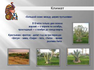 «Большой оазис между двумя пустынями» Крестьянин –феллах - делит год натри п