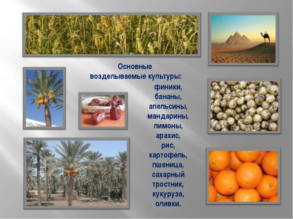 Основные возделываемые культуры: финики, бананы, апельсины, мандарины, лимоны...