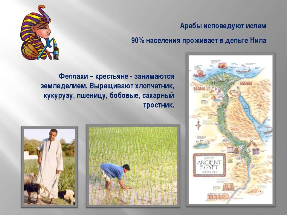 90% населения проживает в дельте Нила Феллахи – крестьяне - занимаются землед...