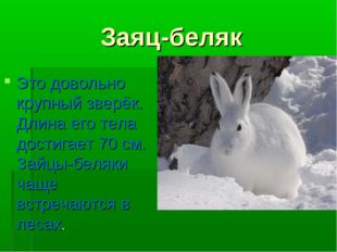 Заяц-беляк Это довольно крупный зверёк. Длина его тела достигает 70 см. Зайцы