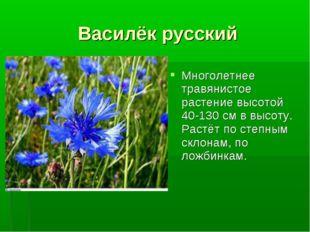 Василёк русский Многолетнее травянистое растение высотой 40-130 см в высоту.