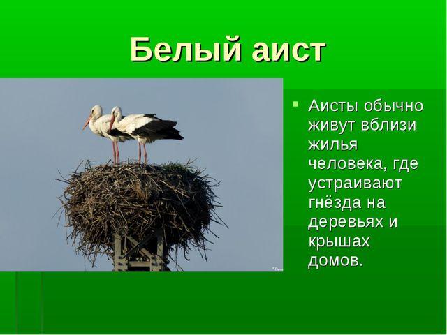 Белый аист Аисты обычно живут вблизи жилья человека, где устраивают гнёзда на...