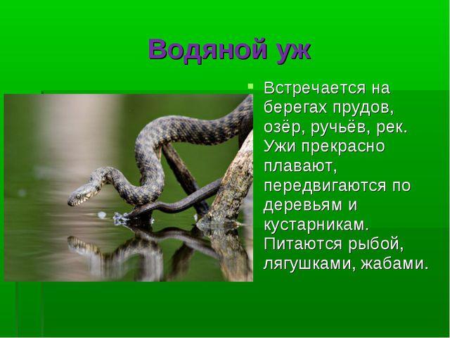 Водяной уж Встречается на берегах прудов, озёр, ручьёв, рек. Ужи прекрасно пл...