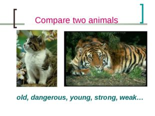 Compare two animals old, dangerous, young, strong, weak…
