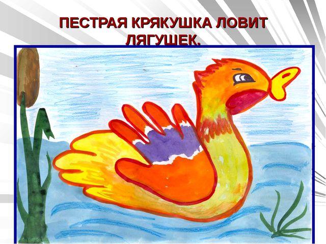 ПЕСТРАЯ КРЯКУШКА ЛОВИТ ЛЯГУШЕК.