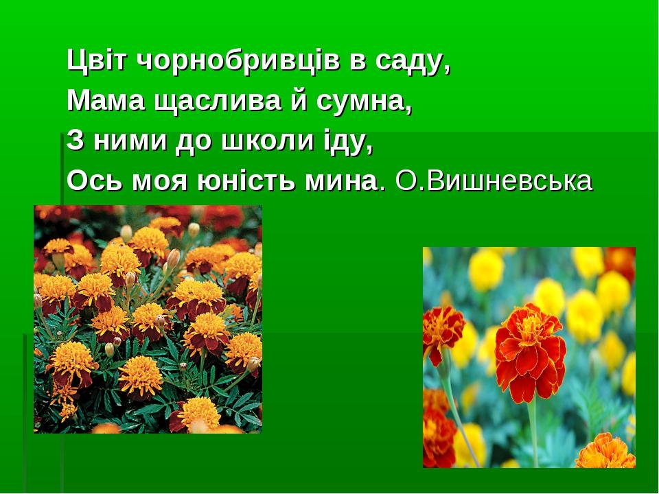 Цвіт чорнобривців в саду, Мама щаслива й сумна, З ними до школи іду, Ось моя...