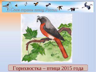 Горихвостка – птица 2015 года