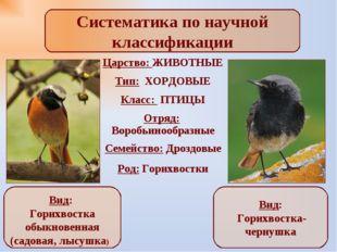Систематика по научной классификации Вид: Горихвостка обыкновенная (садовая,