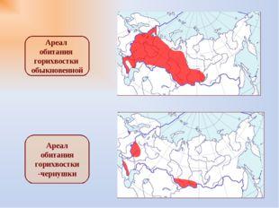 Ареал обитания горихвостки обыкновенной Ареал обитания горихвостки -чернушки