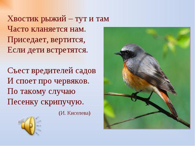 Хвостик рыжий – тут и там Часто кланяется нам. Приседает, вертится, Если дет...