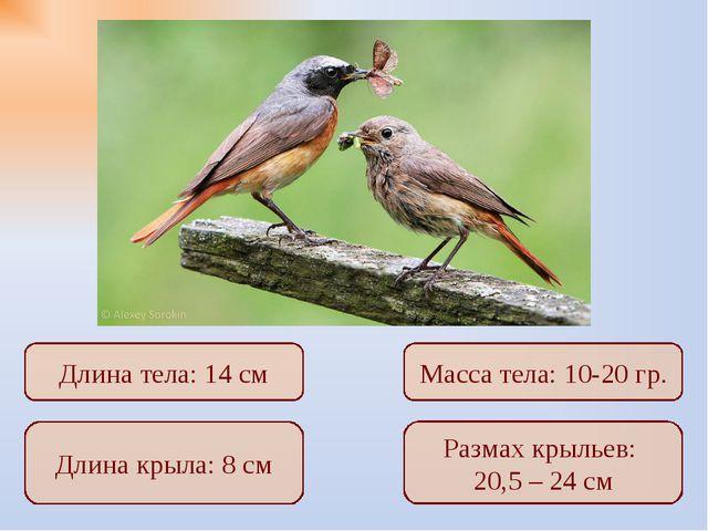 Длина крыла: 8 см Размах крыльев: 20,5 – 24 см Длина тела: 14 см Масса тела:...