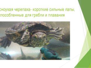 Красноухая черепаха- короткие сильные лапы, приспособленные для гребли и плав