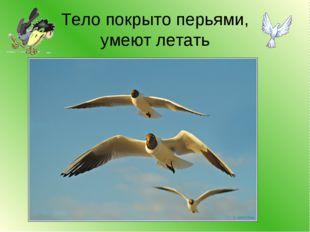 Тело покрыто перьями, умеют летать