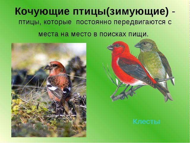 Кочующие птицы(зимующие) - птицы, которые постоянно передвигаются с места на...
