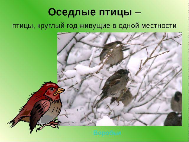 Оседлые птицы – птицы, круглый год живущие в одной местности Воробьи