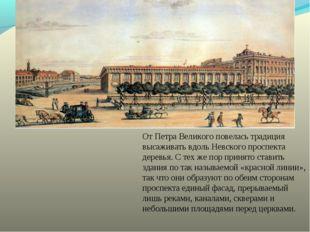 От Петра Великого повелась традиция высаживать вдоль Невского проспекта дерев