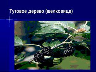 Тутовое дерево (шелковица)