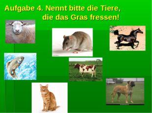 Aufgabe 4. Nennt bitte die Tiere, die das Gras fressen!