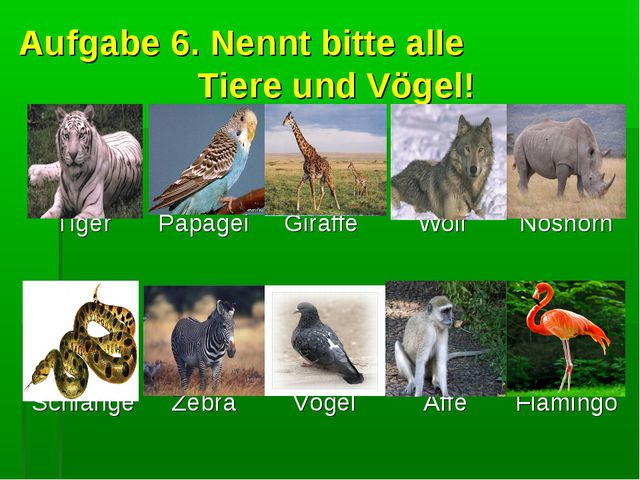 Aufgabe 6. Nennt bitte alle Tiere und Vögel! Tiger  Papagei  Giraffe  Wolf...