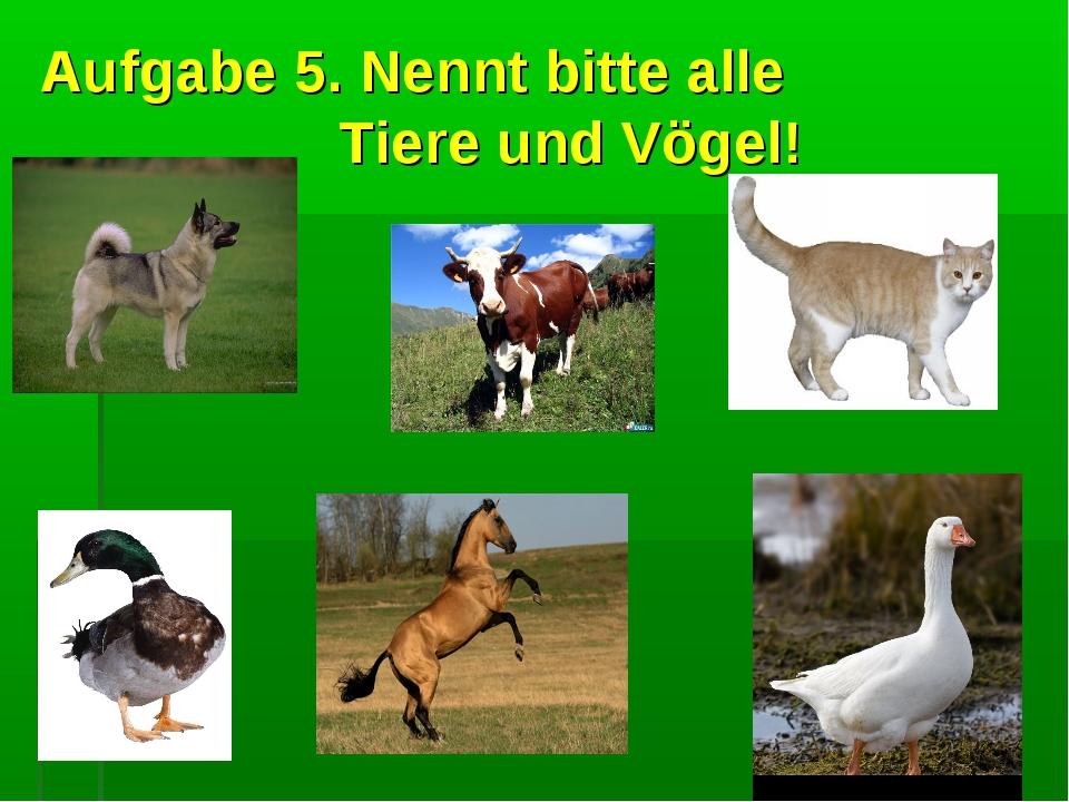 Aufgabe 5. Nennt bitte alle Tiere und Vögel!