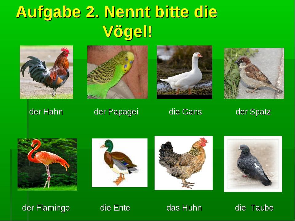 Aufgabe 2. Nennt bitte die Vögel! der Hahn  der Papagei die Gans der Spatz...