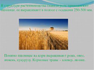 В структуре растениеводства главная роль принадлежит пшенице, ее выращивают в