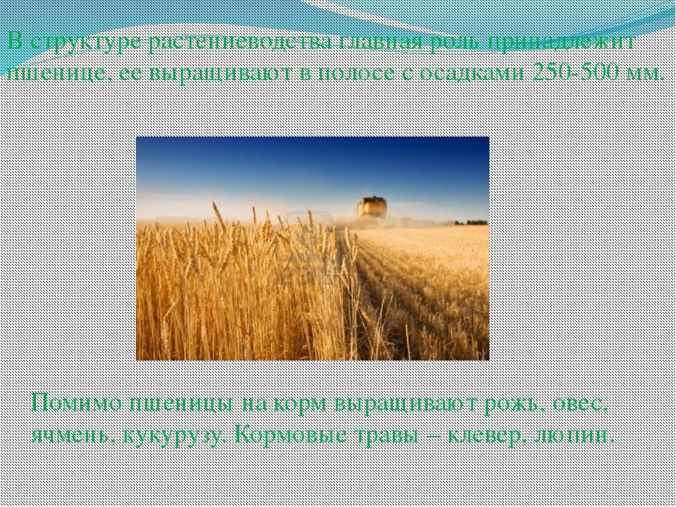 В структуре растениеводства главная роль принадлежит пшенице, ее выращивают в...