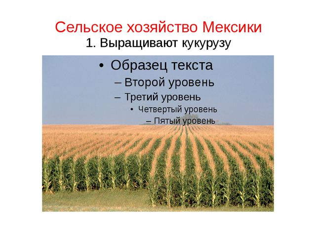 Сельское хозяйство Мексики 1. Выращивают кукурузу