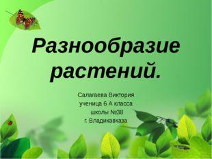 Разнообразие растений. Салагаева Виктория ученица 6 А класса школы №38 г. Вла