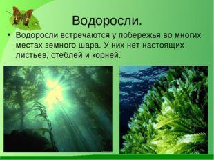 Водоросли. Водоросли встречаются у побережья во многих местах земного шара. У