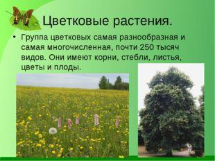 Цветковые растения. Группа цветковых самая разнообразная и самая многочисленн