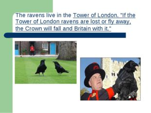 """Theravens live in theTower of London. """"If the Tower of London ravens are lo"""