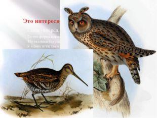 Это интересно! То что форма клюва и ног зависит у птиц от образа жизни вы зна