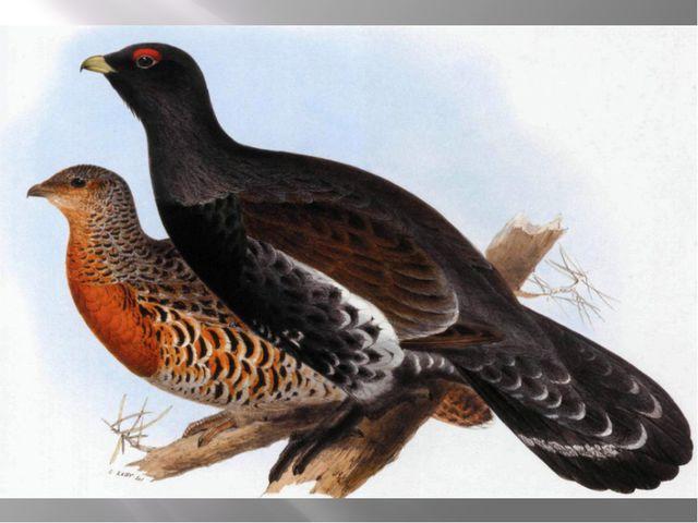 Какие птицы ночуют, зарываясь в снег?