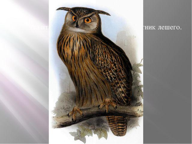 Эта птица в сказках – крылатый спутник лешего.