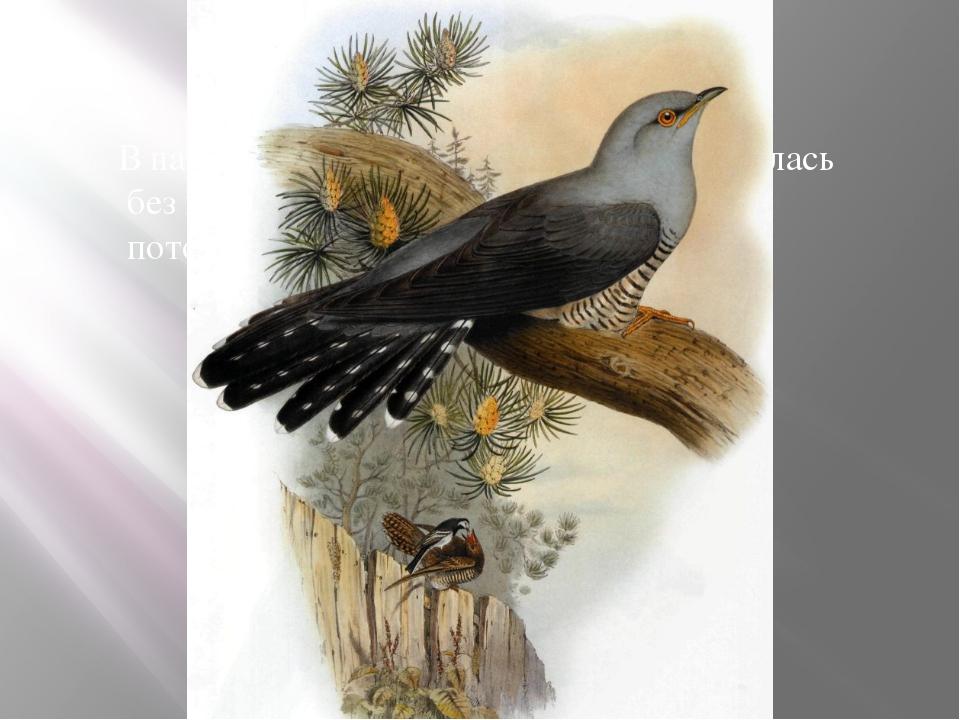 В народе утверждают, что эта птица осталась без гнезда, потому что свила его...
