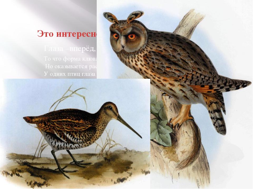Это интересно! То что форма клюва и ног зависит у птиц от образа жизни вы зна...