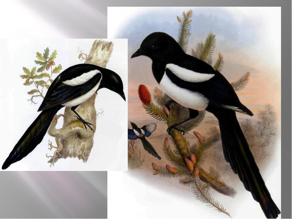 1. Какая птица из сорока букв состоит? 40 а