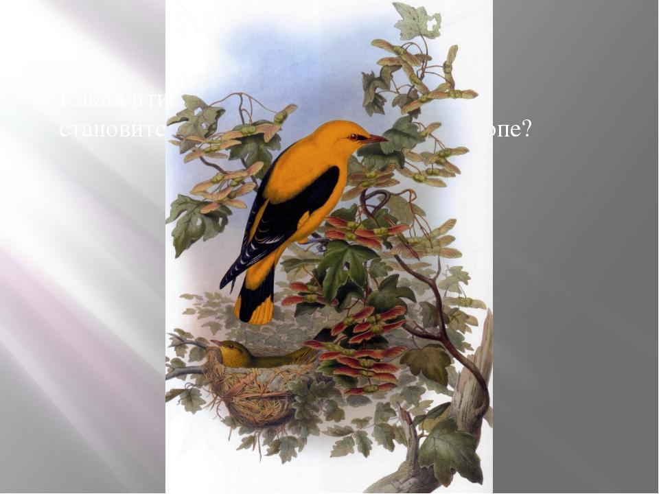 Какая птица, потеряв одну букву , становится самой большой рекой в Европе?