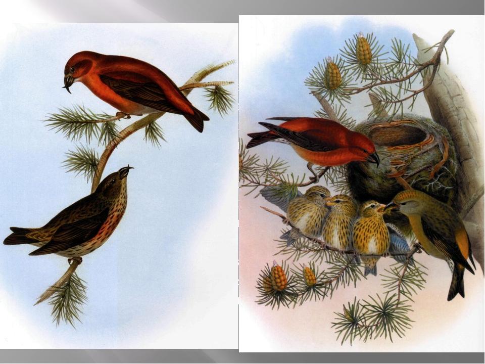 Это интересно! Чтобы сохранить птиц в музее, из них делают чучела. Но в наших...