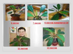 6 листов 7 листов 11 листов 13 листов 9 листов появляется 10