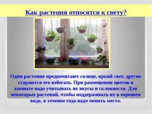 Как растения относятся к свету? Одни растения предпочитают солнце, яркий свет